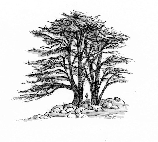 1 Kings 5 20 Illustration Cedars Of Lebanon Saint Mary